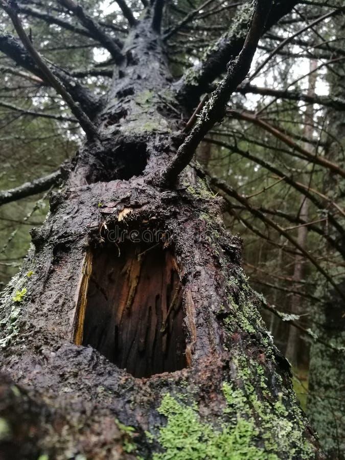 Wood stam arkivbild