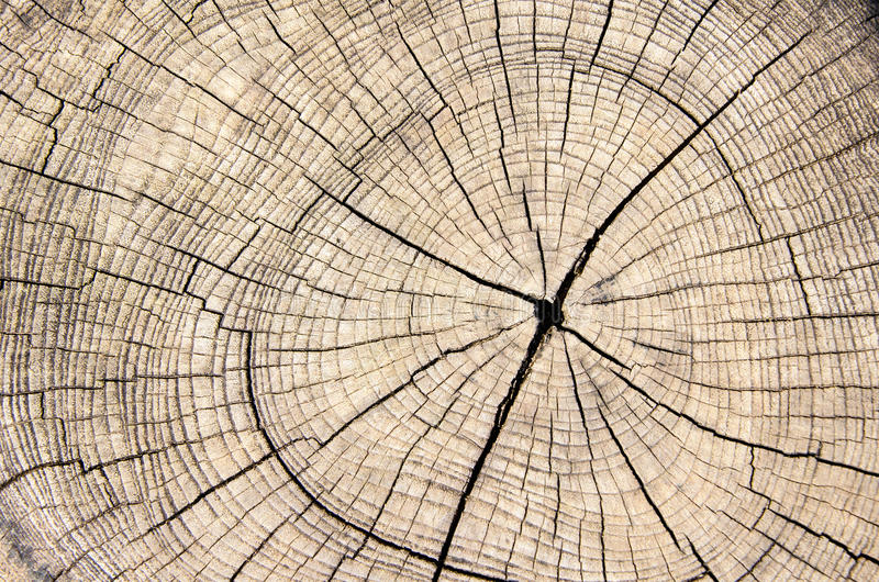 Wood stam för textursnittträd