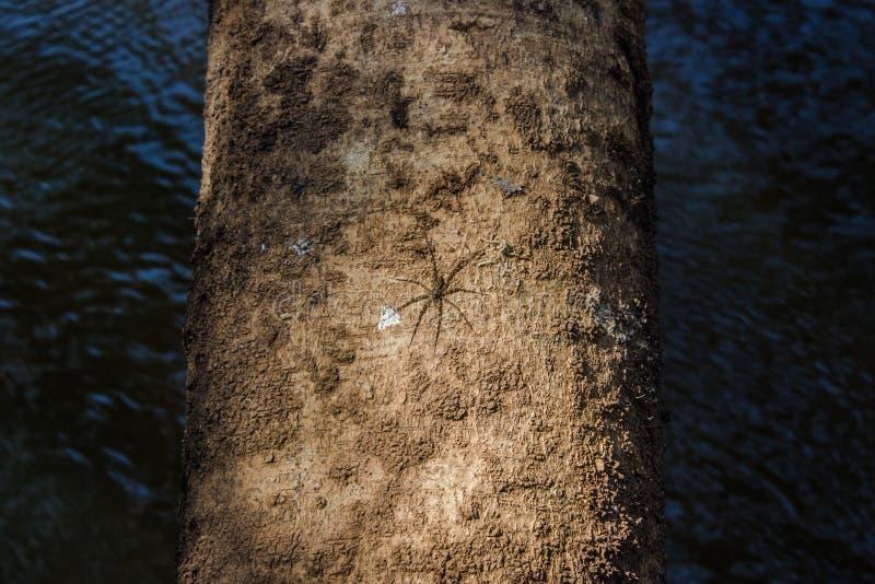 Wood stam arkivfoton