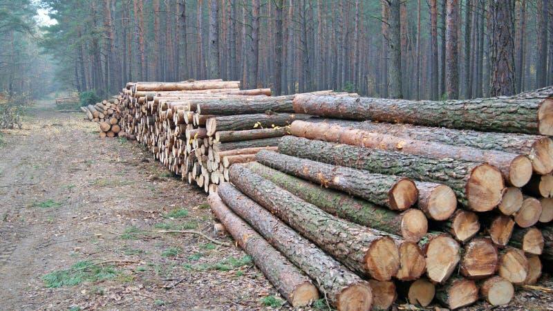 Wood Staplar Royaltyfri Bild