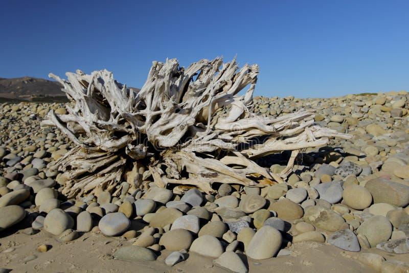 Wood strand och himmel för driva arkivbilder