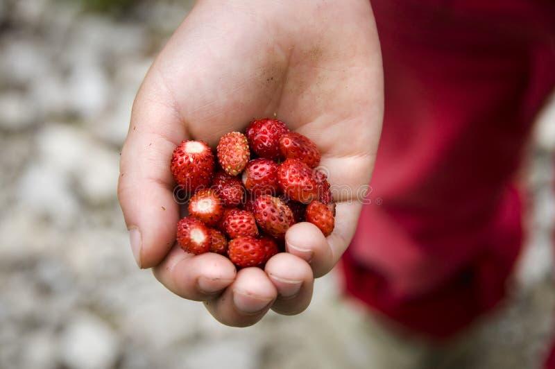 Wood strawberries stock photo