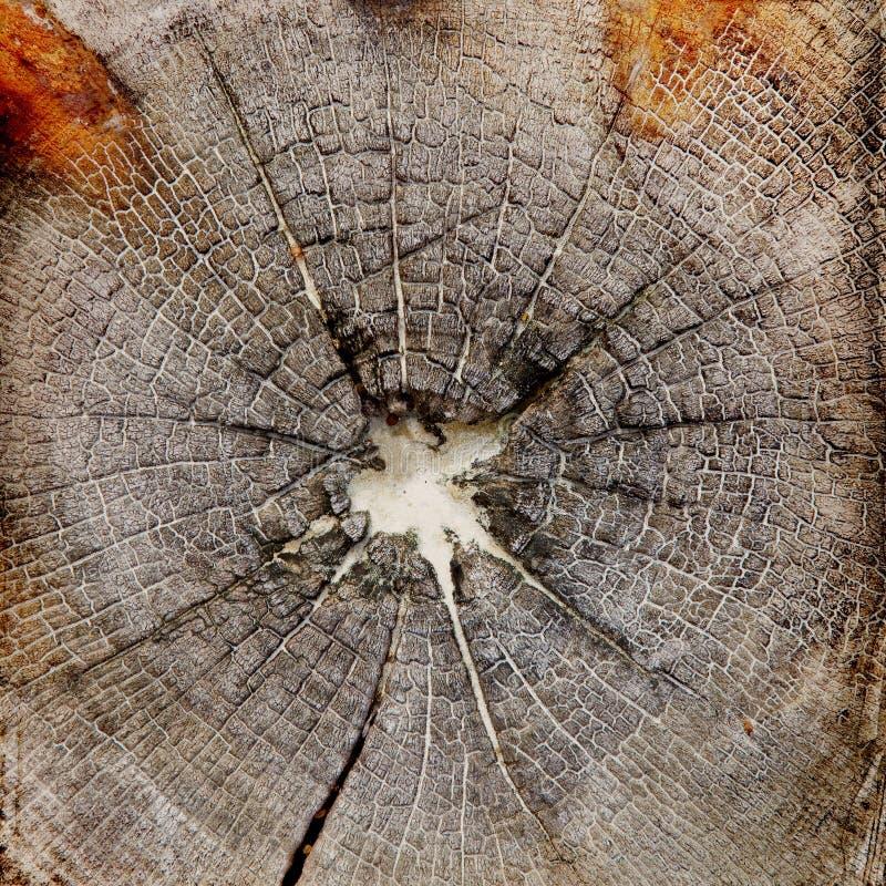Download Wood Structure Grunge Background Stock Photo - Image of desktop, blank: 39501664