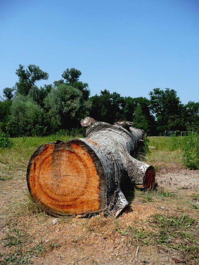 Wood stub. stock image