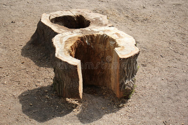 Wood. Stump - a small portion of the tree trunk, left after its partial destruction, and includes its roots royalty free stock photo