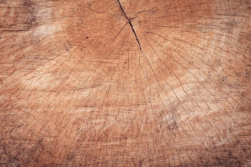 Wood stumps texture with pattern background. Detail of cutting wooden structure for interior design or construction. Textured of stock photo