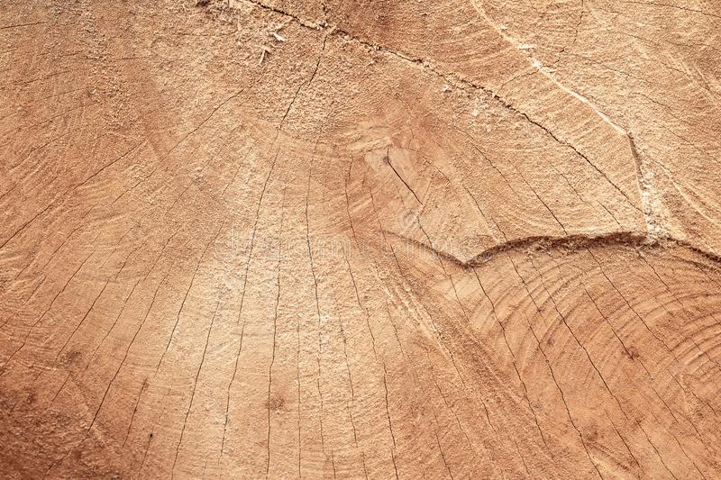 Wood stumps texture with pattern background. Detail of cutting wooden structure for interior design or construction. Textured of stock photography