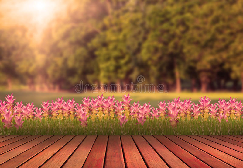 Wood terrace and tulip flower with green tree plan stock photos