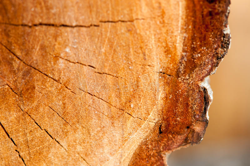Wood textur av den klippta trädstammen arkivbilder
