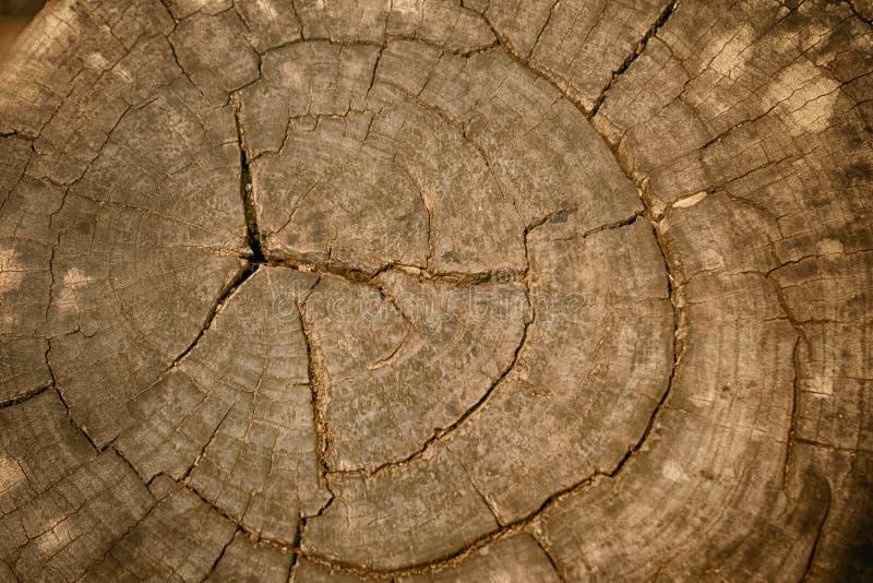 Wood textur av den klippta trädstammen arkivbild