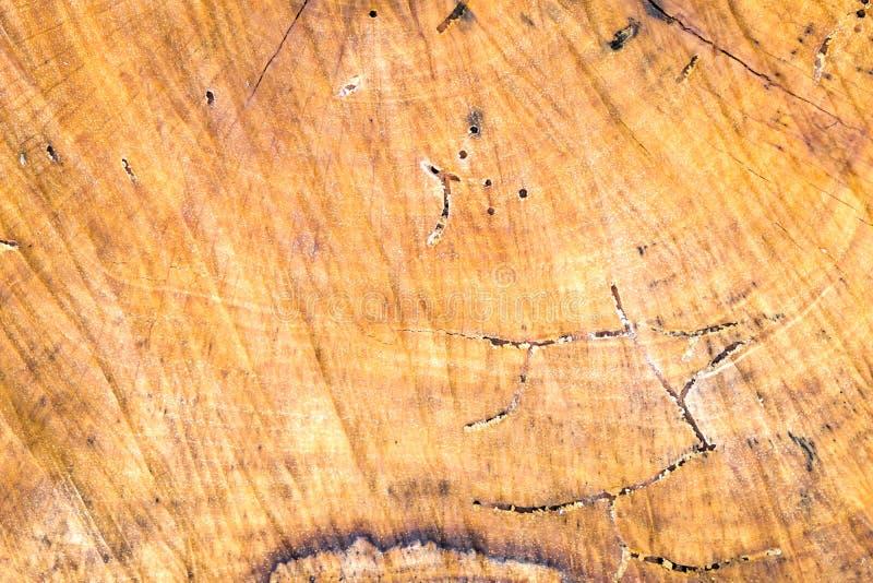 Wood textur av det verkliga trädet som ner klipps fotografering för bildbyråer