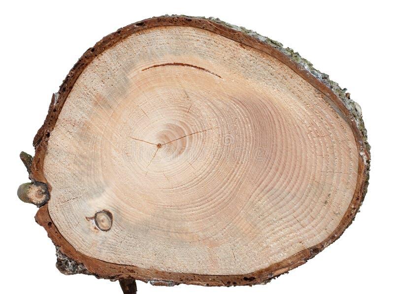 Wood textur för grankorssnitt med defekter arkivbilder
