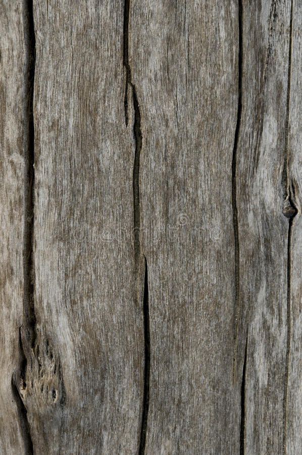 WOOD TEXTURE. Background and traces of wood texture