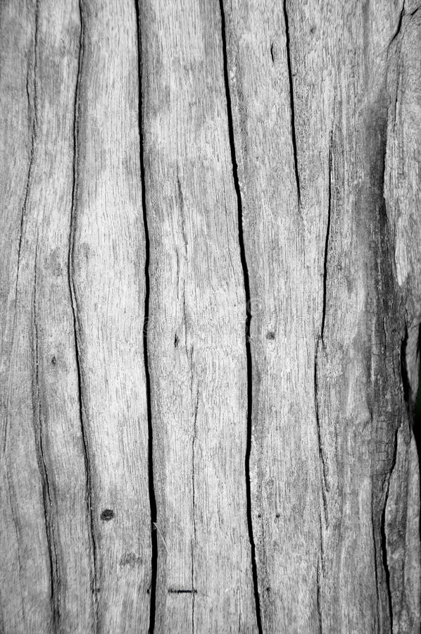 Wood texture. Background and traces of wood texture royalty free stock photos