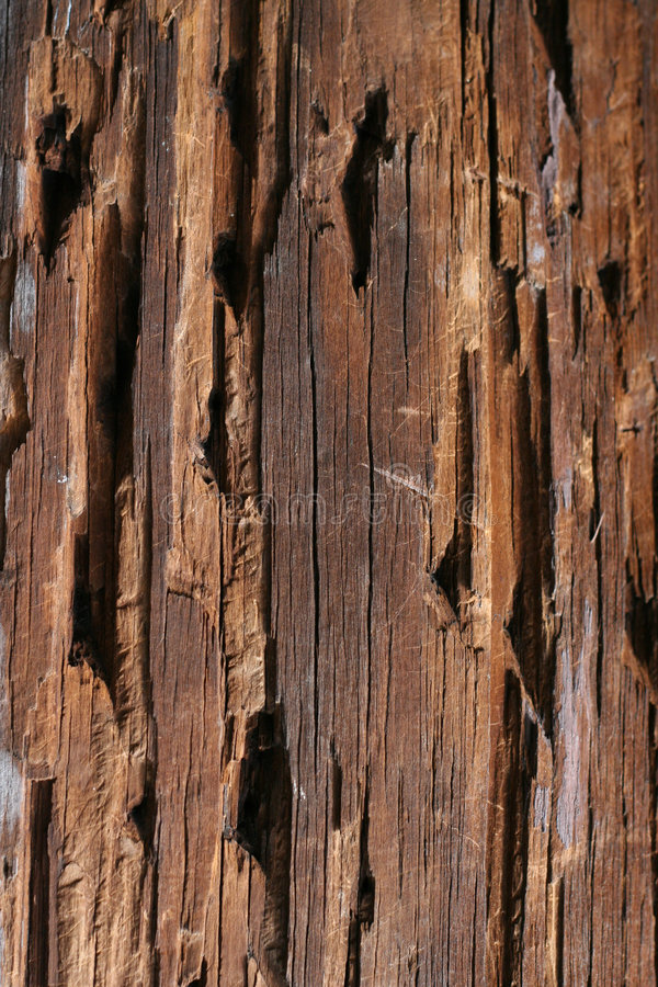 Wood texture. Old Wood texture background tree royalty free stock photography