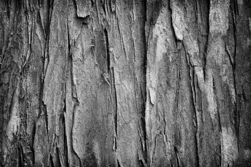 Download Wood texture stock image. Image of background, macro - 19708189