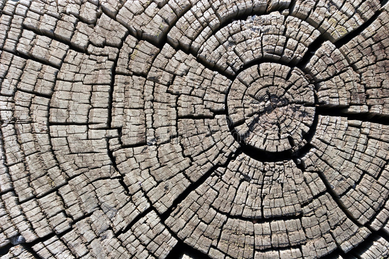 Download Wood Texture stock photo. Image of surface, design, concentric - 233806