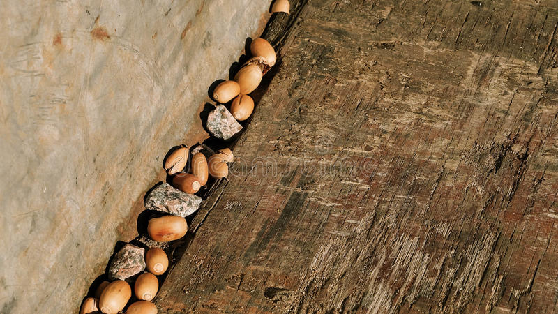 Wood texture with acorns royalty free stock photos