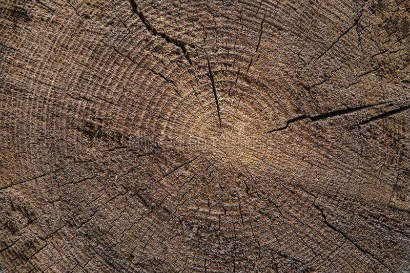 Wood texture of cut tree trunk royalty free stock images