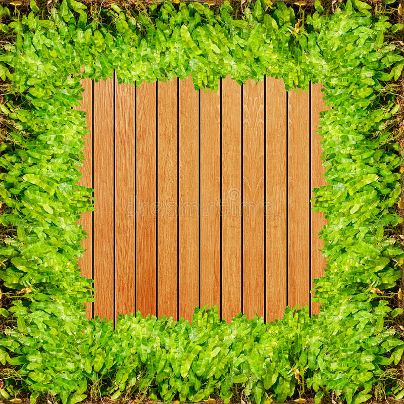 Wood texture background plank panel timber and green plant Caladium frame.  royalty free stock photo
