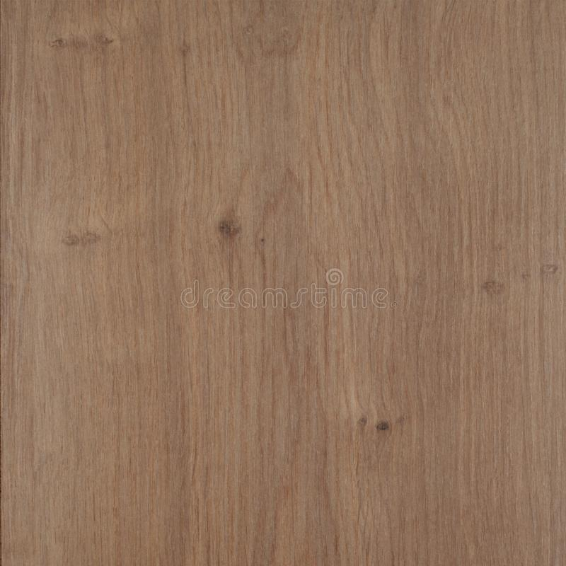 Wood texture background. Thuya texture, plastic royalty free stock photography