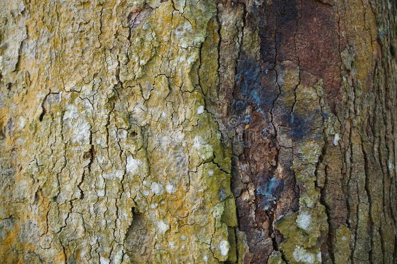 Tree trunk detail texture as natural background. Bark tree texture wallpaper. Wood texture background. trunk detail texture background. Bark tree texture royalty free stock photography
