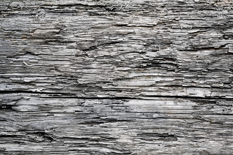 Wood texture close-up. royalty free stock photo