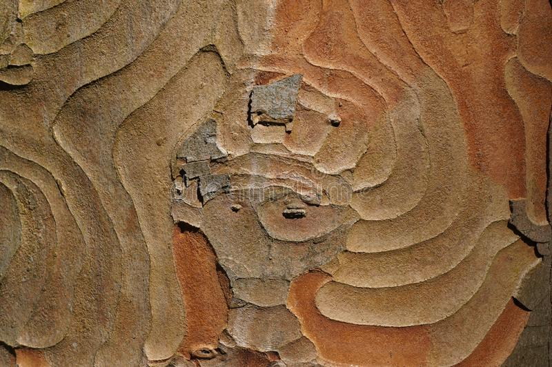 Wood texture pattern stock photo