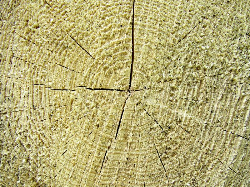 Wood texture of cut tree trunk, close-up. Cross section of tree trunk showing growth rings.. Tree rings background and saw cut tree trunk royalty free stock photo