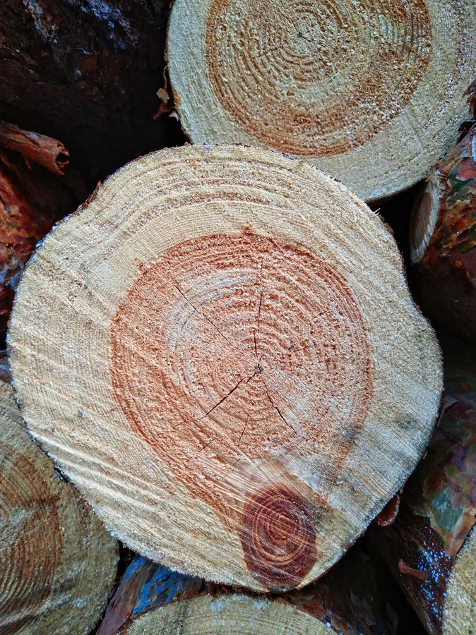 Wood texture of cut tree trunk. Wood rings of cut tree trunk. Wood rings background stock photography