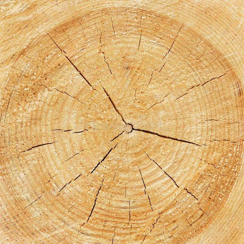 Download Wood Texture Of Cutted Tree Trunk Stock Photo - Image: 83705025
