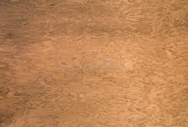 Wood texture. decorative veneer. walnut root. use as background. royalty free stock images