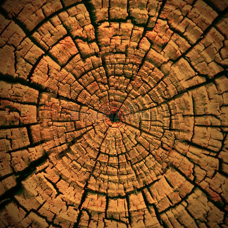 Wood texture detail background wallpaper royalty free stock images