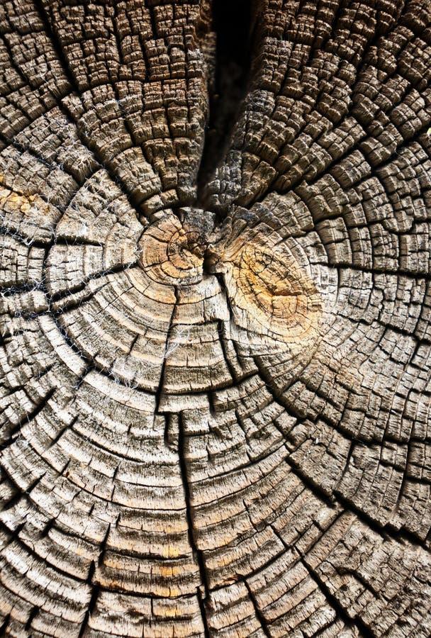 Wood texture, macro background stock images