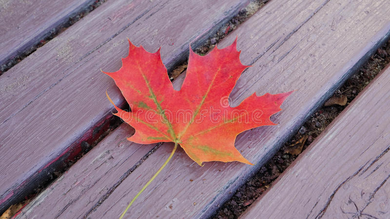 Wood texture with maple leaf royalty free stock photography