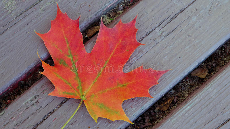 Wood texture with maple leaf stock photo