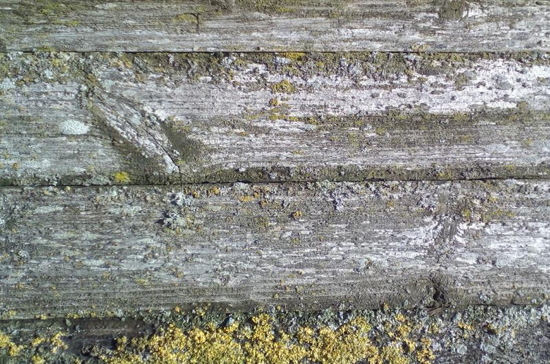 Wood texture old. Fragment of a wooden house wall backgraund and lichens stock photos