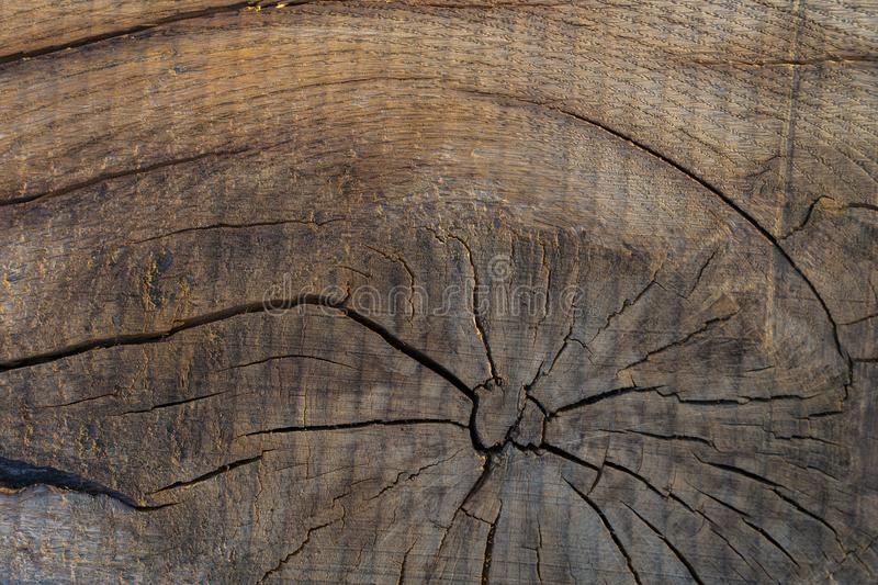 Wood texture of real tree cut down. stock photography