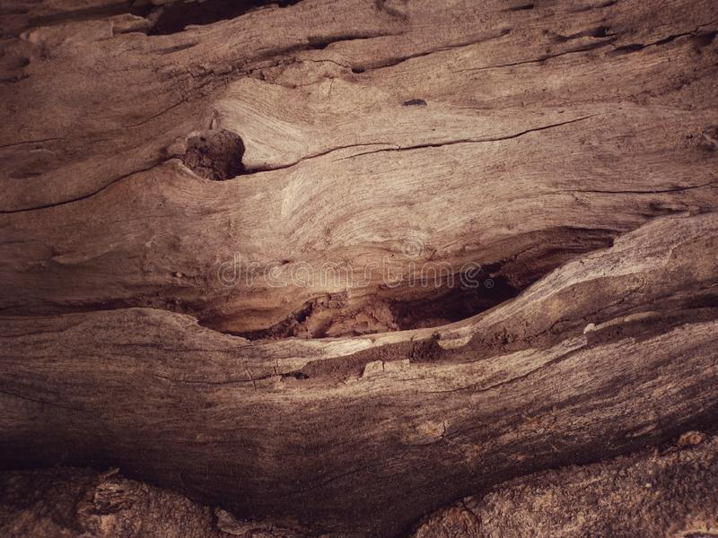 Wood texture, retro style, closeup of wood texture. Old, tree, branch, brown, vintage, dry-wood stock photos