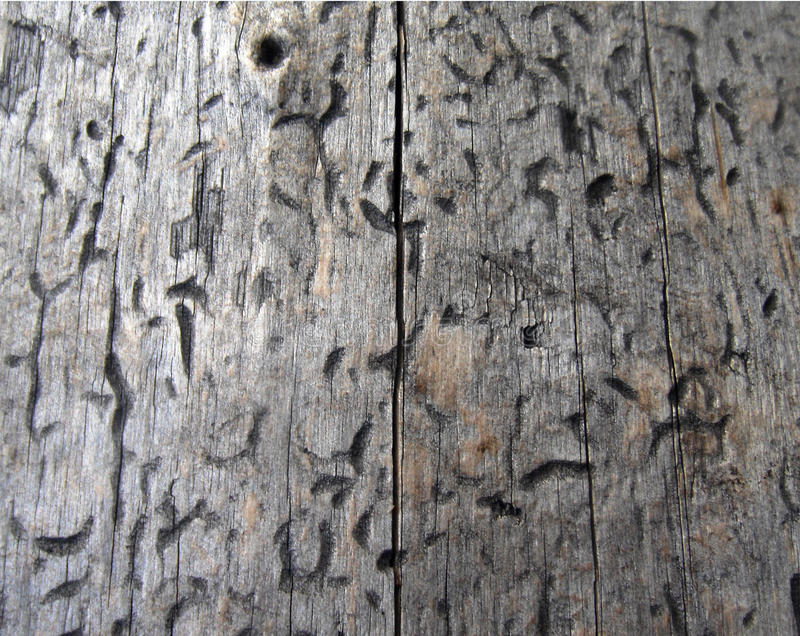 Wood texture, timber texture, nature background stock photo
