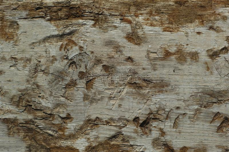 Wood, Texture, Tree, Trunk stock photo