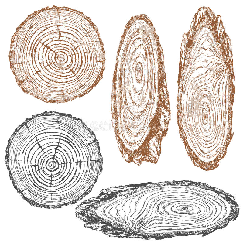 Wood texture of trunk tree sketch. Round and oval cross section of tree trunk. Wooden texture with tree rings. Hand drawn sketch stock illustration