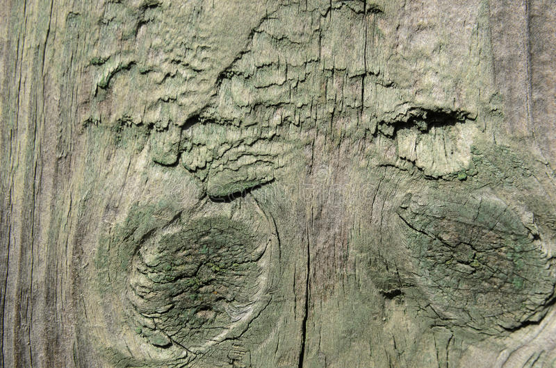 Wood texture, vertical lines. Green paint stock image