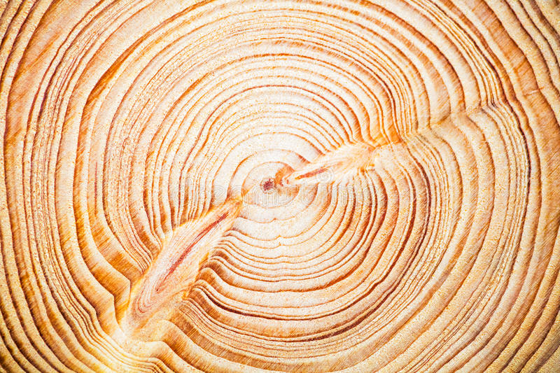 Wood texture year-old rings background, Cedar Lebanese stock images