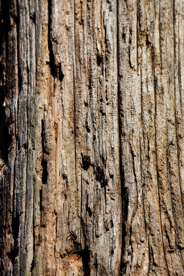 Download Wood Textured stock photo. Image of wood, timber, brown - 14073366