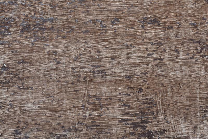 Wood texturmakro royaltyfri bild