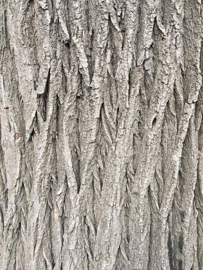 Wood texturmodell för naturlig gammal brun skorpa eller wood bakgrund för skäll för inre eller yttre design med kopieringsutrymme royaltyfria foton