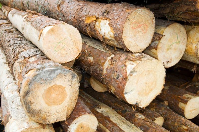 Wood timber royalty free stock photos