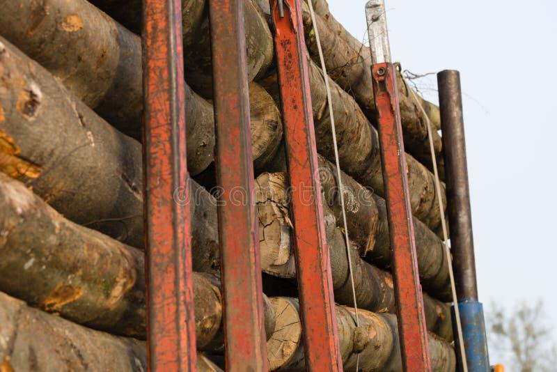 Wood transport arkivbild