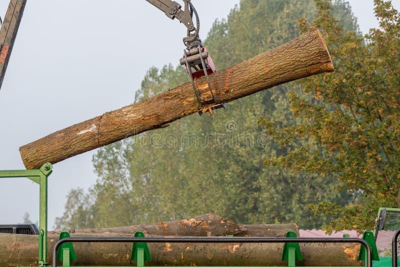 Wood transport fotografering för bildbyråer